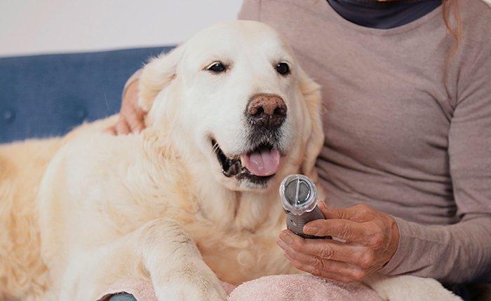 Familiariser ton chien avec le lime-griffes électrique.