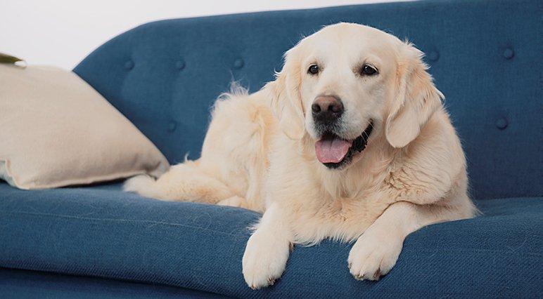 Couper les griffes de votre chien à la maison avec le lime-griffes électrique pour animaux de compagnie Dremel.
