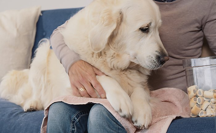 Before you start trimming your dog's nails, get in a comfortable position and make sure that you can firmly grip the paw and have it in full view.
