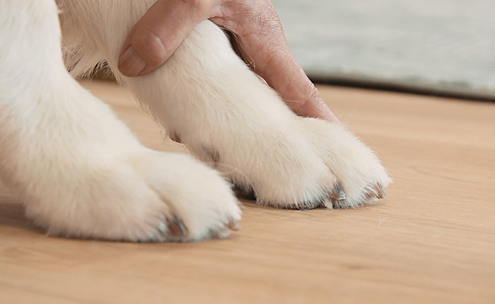Check the length of your pet's nails after trimming: they've been sufficiently trimmed when they no longer touch the ground.