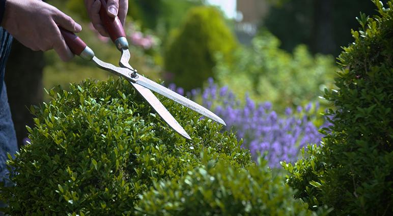 Een scherpe snoeischaar is beter voor je planten en ook minder vermoeiend voor je spieren