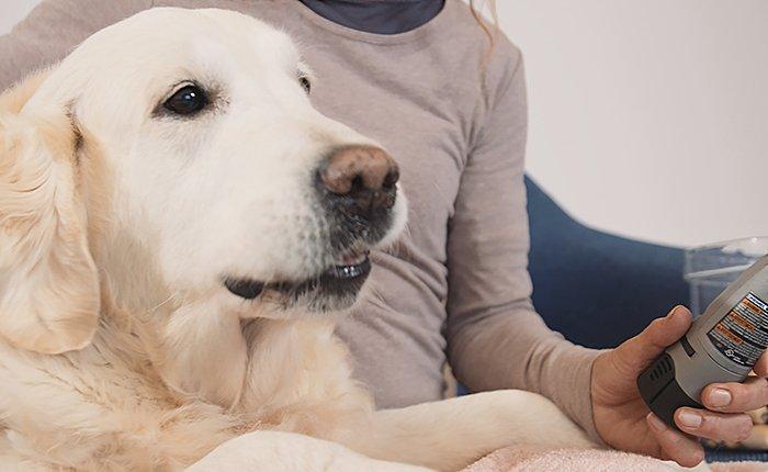 Neem korte pauzes terwijl je de nagels van je huisdier vijlt.