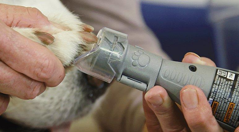 Fouten voorkomen bij het knippen van de nagels van je hond met Dremel